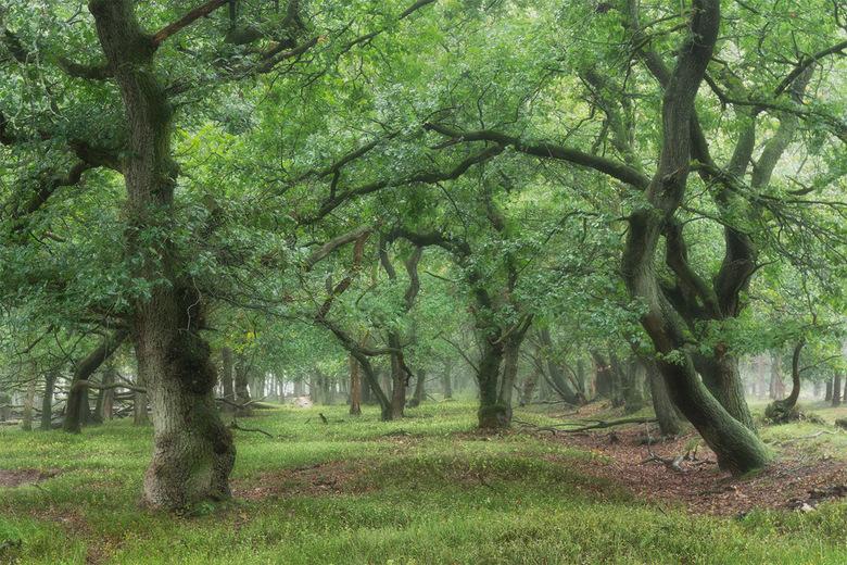 Gates to the forest - Genoten vorige week in het Deelerwoud. De grijze omstandigheden zijn perfect voor fotografie in de bossen. Een beetje regen zorg