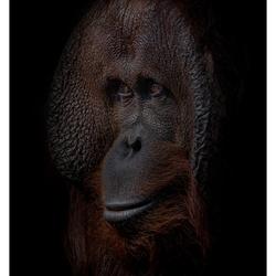 Dark moody portret van Amos