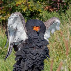 Roofvogelboederij