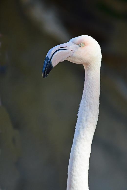 """rust - In de compositie van mijn foto van gisteren """"ook in Afrika"""" wilde ik tot uitdrukking brengen dat flamingo's dicht op elkaar in g"""