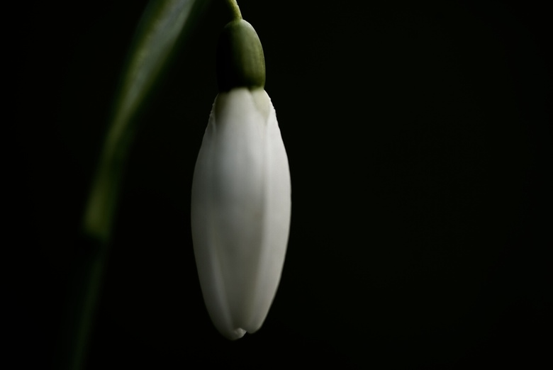 Spring time -