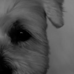 Zwart wit hond nr. 2