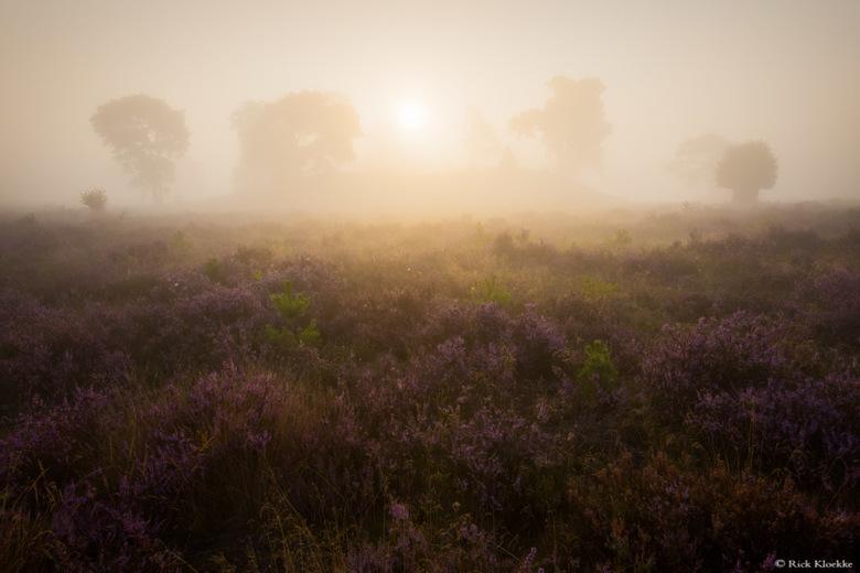 Veluwe zonsopkomst - &quot;Golden Fog&quot;<br /> <br /> Elke fotograaf heeft wel een plekje op maximaal een half uurtje rijden waar hij/zij graag h