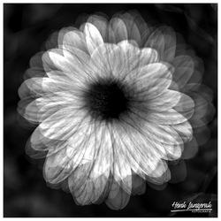 Spiroflower -1-