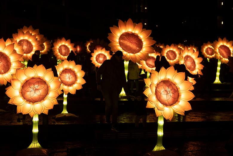 2019 11 13_MVH_8723.px1132 - Lichtkunst naar zonnebloemen van Gogh