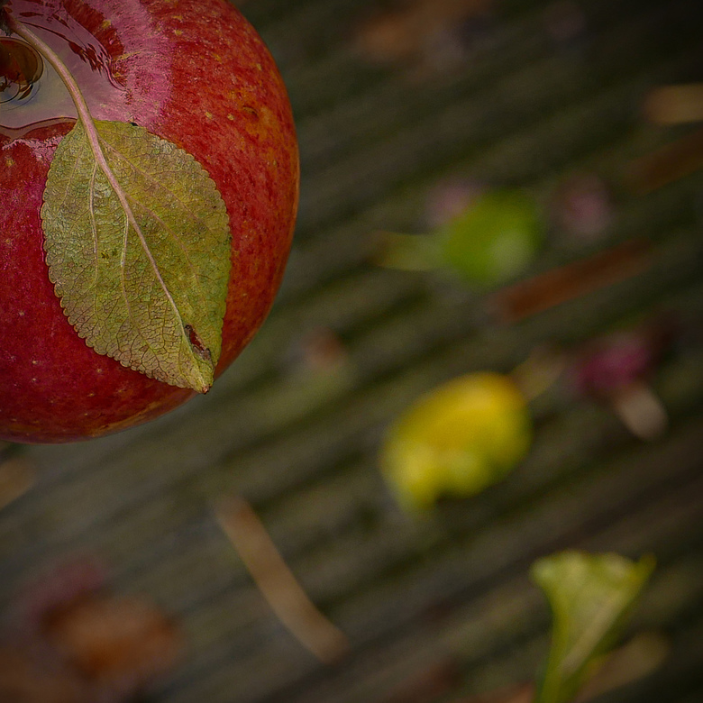 Een appeltje... - in de regen.<br /> <br /> Bedankt voor de mooie reacties bij &#039;achter de bomen&#039; en &#039;motorcyclegarage&#039;.