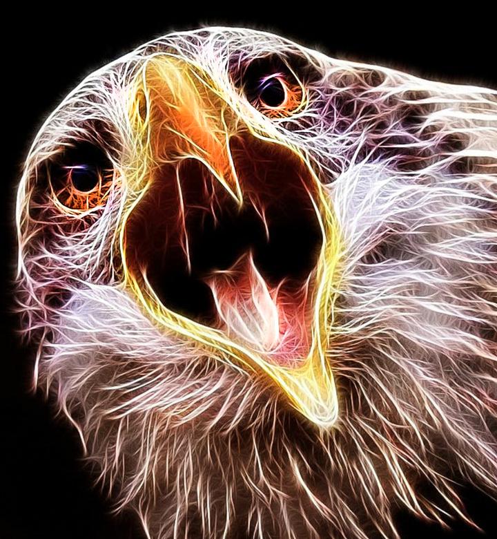 Sterk - Zou je voor mijn zoon een foto of fotoart kunnen maken van een roofvogel? Dat vind hij vast en zeker leuk om aan zijn muur te hebben. Dit vroe