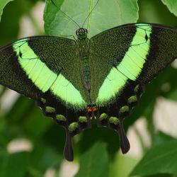 vlinder in een vlindertuin zuid frankrijk