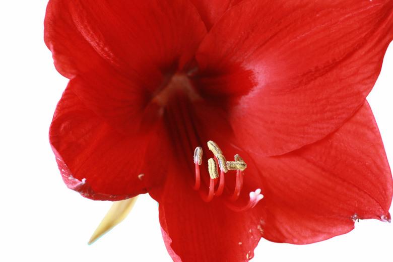 bloem - even geprobeert met statief en een blad papier