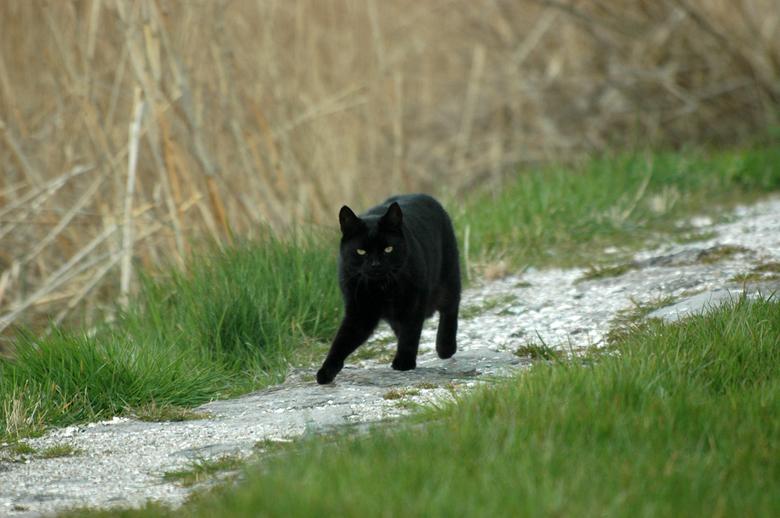 grote zwarte poesje Fotos zwarte grote sappige pussy
