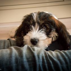 Puppy Sil