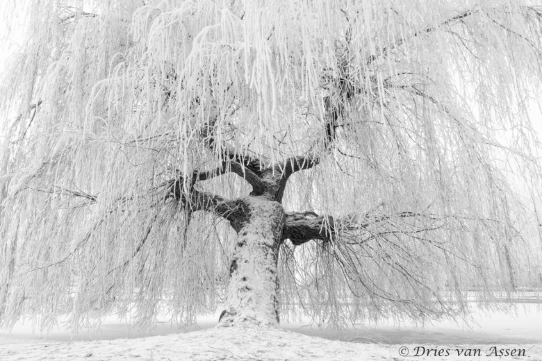 Winter 2017 - Winter in het Kamper plantsoen