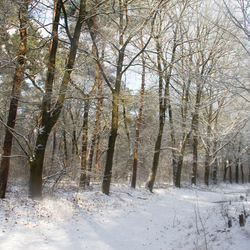 Bospad bij Groesbeek
