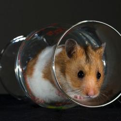 Hamster heeft glas leeg