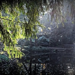 Stilte,  wat groen, zonlicht en verder helemaal niets