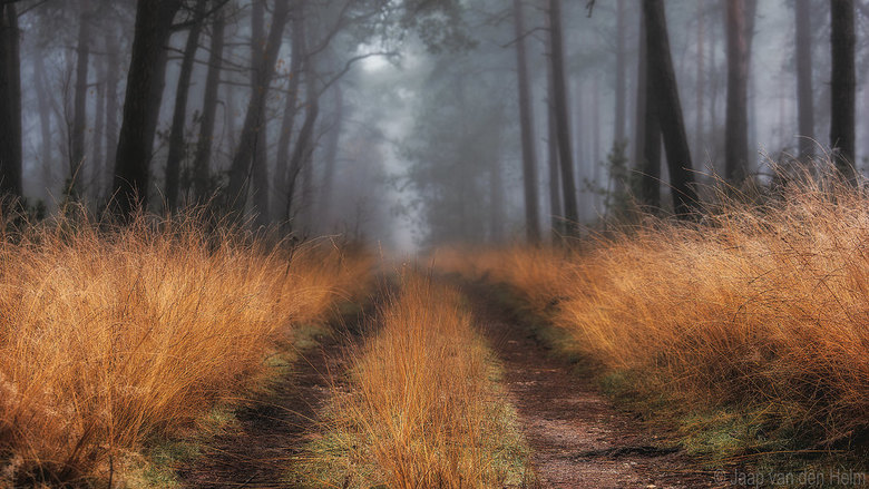 Three lines of Grass -