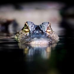 I'm watching you!!