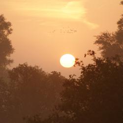 Zonsopgang op een mistige morgen