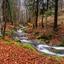 Autumn river panorama