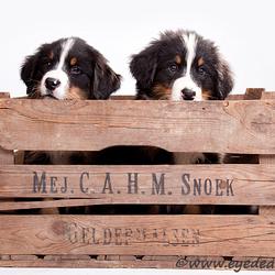 Kistje hondjes