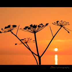 Sunset bij het IJsselmeer