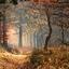 Herfst in het Edese bos (2)
