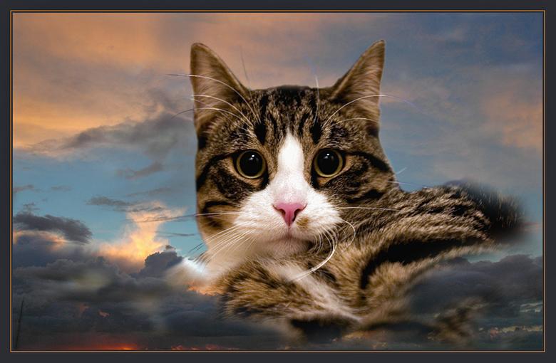 Bewerking: Prins Puma - Dennis,<br /> <br /> Beloofd is beloofd. Ik heb wat gespeeld met Photoshop. Dat is niet mijn sterkste kant maar ik wilde je