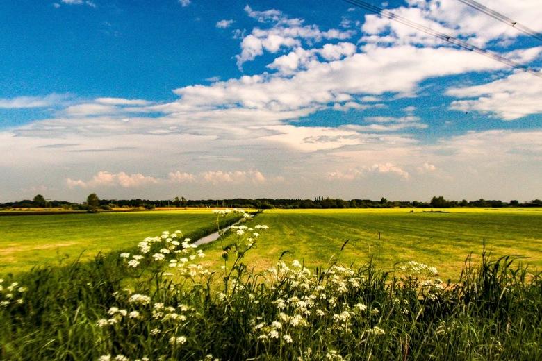 Weidsheid in NL - Kockengen