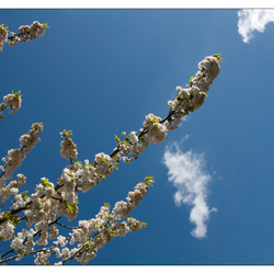 het is voorjaar