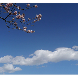 vleugje voorjaar