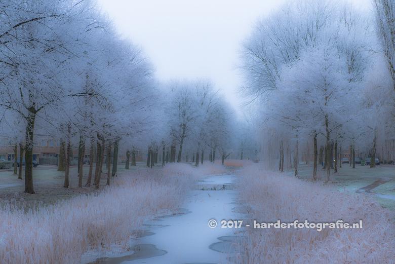Wegdromen - Hoe anders kan het zijn. Een jaar geleden in januari was het koud en lag er wat sneeuw en rijp aan de bomen. En dat zorgt weer voor sfeerv