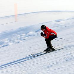 Skieër
