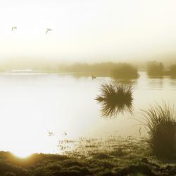 Naardermeer in de ochtend