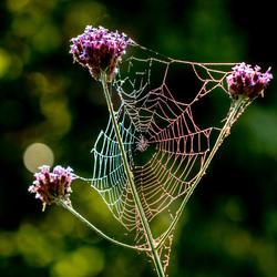 5506 web in kleur