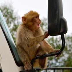 Wie is die knappe aap?!