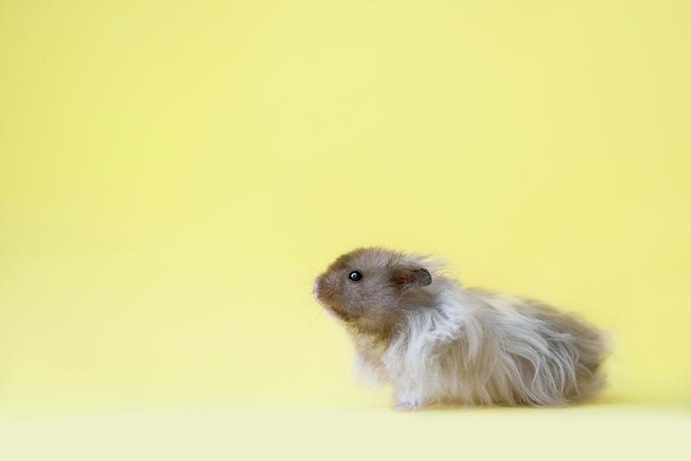 Hamster Milo  - Nieuwsgierig hamstertje <br />