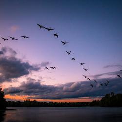 Lucky birds