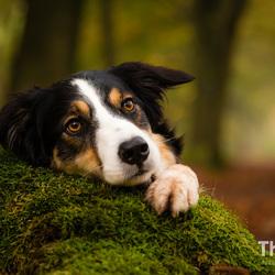 Tree cuddling
