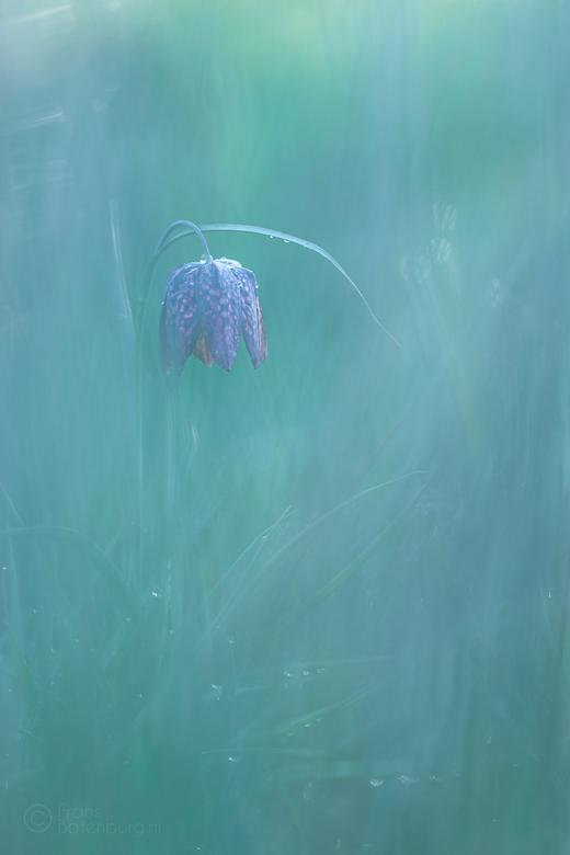 Zoeken in het gras