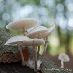 De schatten van het Speulderbos...