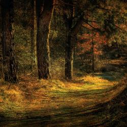 Licht in het bos....