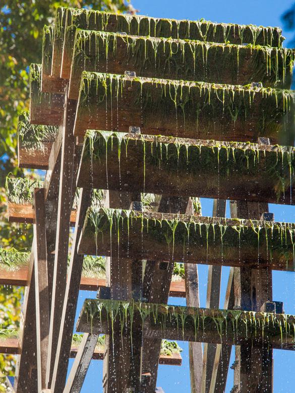 Waterrad - Een met algen begroeid waterrad in Duitsland