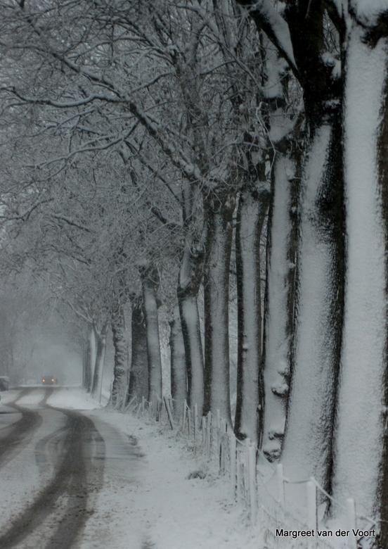 Besneeuwde weg - Weg vol met sneeuw en de stammen van de bomen langs de weg zijn ook vol sneeuw. In de verte zie je de achterlichten van een auto.