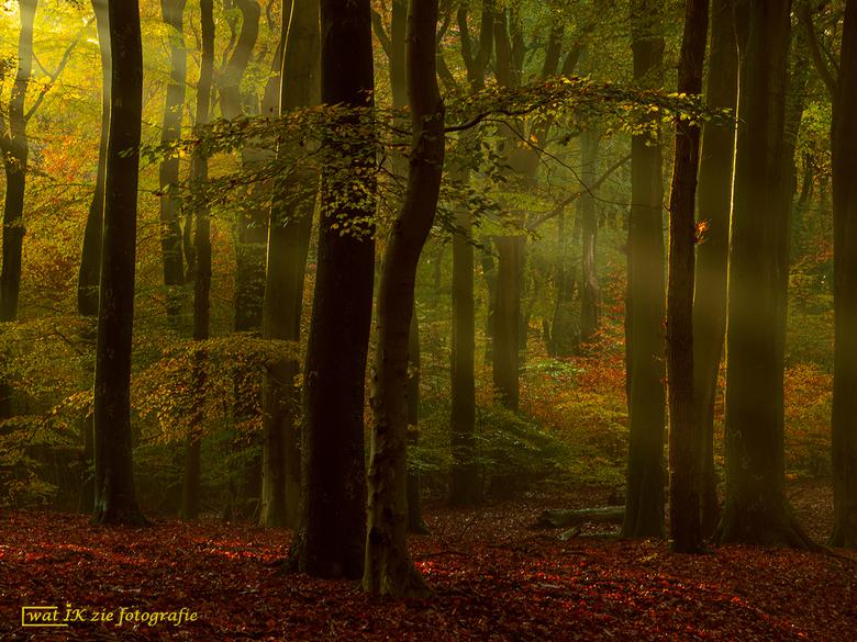 Magical morning - Een magische ochtend in het Speulderbos.