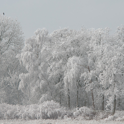 Winterse sferen in Friesland.