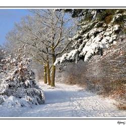 Drunense Duinen in de winter