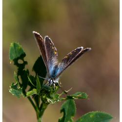 een mooie vlinder