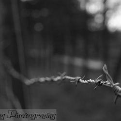 Kamp Westerbork 4