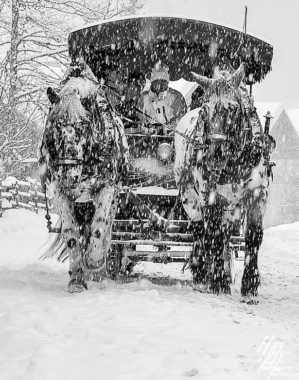 Sneeuw paard en wagen -