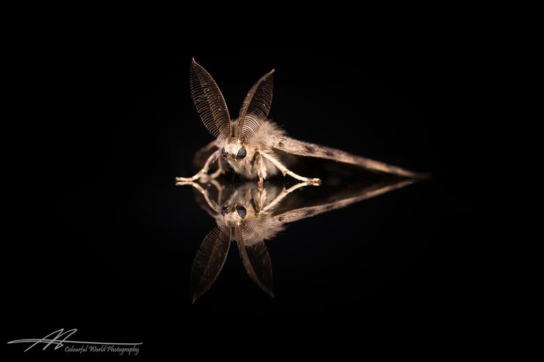 Nocturne - De start van een klein project met de naam Zwartboek. Een project met portretten van verschillende insecten om hun schoonheid van dichtbij